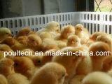 Новая пластичная клетка перехода цыпленка и клетка экипажа