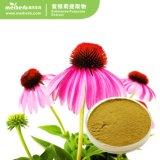 Usine extrait naturel de gros de l'échinacée purpurea
