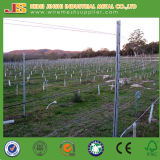 2,5 m galvanizado Vineyard Post, Grapery Estaca, uva del anuncio