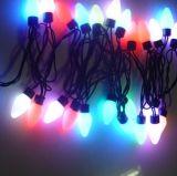 Het LEIDENE Licht van Kerstmis (BSD-25l-230v-streptokok-s)