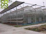 Serra di vetro di agricoltura con il blocco per grafici d'acciaio da vendere