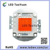 Volles Spektrum 380-840nm wachsen der Beleuchtung-LED des Chip-30-100W