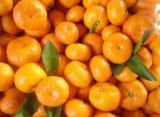 Cítricos frescos mandarín naranja