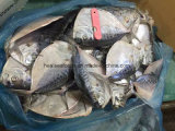 中国の製造業者の100-150gによってフリーズされるMoonfish
