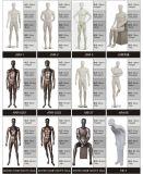 Het mannelijke Model van het Lichaam van de Winkel van het Kledingstuk van de Opslag van Kostuums Volledige