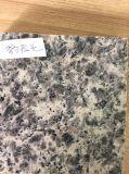 Гранит G603 фабрики Китая Polished серый для плитки пола