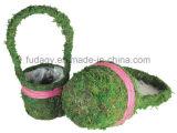 Potenciômetro decorativo do jardim de flor do musgo