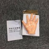 Modelo do Mannequin da mão para o ensino da escola