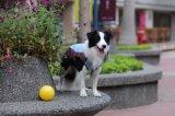 Imperméable Vêtements Pet Dog Produit
