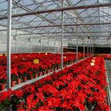Большой тип низкая стоимость сельскохозяйственного цветы парниковых