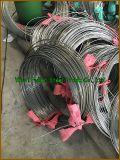 높은 Quality Titanium & Titanium Alloy Pipe 또는 Grade Ti Gr. 11의 Tube