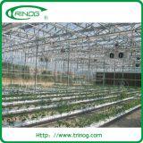 판매를 위한 Hydroponic System Greenhouse Supply