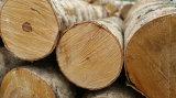 Et meilleure bois conçu par qualité bon marché