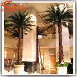 De unieke Kunstmatige Palm van de Decoratie van de Stijl Binnen