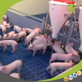 The Piglets Nursery Stall of Professional Equipment