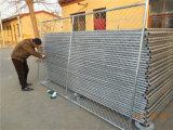 Painéis provisórios da cerca da ligação Chain/painéis portáteis do metal que cerc para a venda (XMS37)