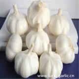 Fornitore di nuovo aglio del raccolto