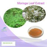 Высокое качество Moringa экстракт листьев (передаточное число: 4: 1~20: 1)