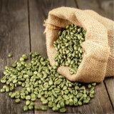 Estratto verde sottile del chicco di caffè del corpo