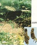 Polvere 1% Ligustilide dell'estratto della radice di Sinensis dell'angelica del campione libero