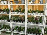 Искусственние заводы и цветки миниого Baosai 45cm Gu-Img_20160128_121156