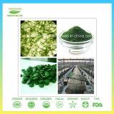 Het beste Natuurlijke Organische Poeder Spirulina van de Kwaliteit