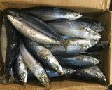 Het best Bevroren Vreedzame Makreel met de Prijs van de Fabriek
