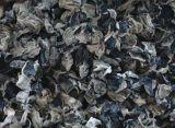 Schwarzes fungöses Auszug-Schwarz-fungöse Polysaccharide 10%~70%