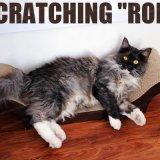 Arbre de chat d'approvisionnement d'animal familier de garantie de sûreté rayant le panneau