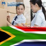 Betrouwbare Oceaan & Overzees die van China aan Zuid-Afrika/Kaapstad/Durban verschepen