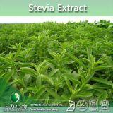 Fabricant de haute qualité d'alimentation de l'extrait de Stevia Steviosides, Rebaudioside 80~90%-40%~98 %