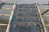 カキ袋、カキの成長する袋、栽培漁業のケージ