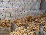 De organische Verse Exporteurs van de Gember van China, het Poeder van de Gember, Gember, Luchtdroge Gember