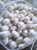 Vendita dell'aglio bianco con buona qualità