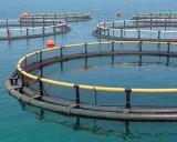 Cage d'exploitation de pisciculture pour l'exploitation de pisciculture en mer