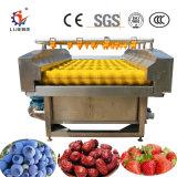 Entièrement automatique des tomates cerises fraise en continu / Nettoyage de la machine