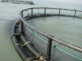 Cages de flottement de pisciculture d'aquiculture de HDPE/PE