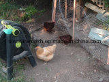 Compensation de fil hexagonale galvanisée Chaud-Plongée de poulet avec la qualité