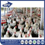 Exploração agrícola de galinha da construção de aço e casa Prefab das aves domésticas