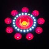 Luz quente 9X8watt RGBW da PARIDADE do diodo emissor de luz da ESPIGA 30W para o disco