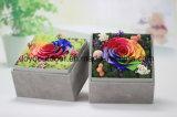 Las garantías frescas preservaron las rosas naturales/flor con buena calidad y precio