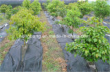 Couvre-tapis matériel tissé de lutte contre les mauvaises herbes de Straberry PE/PP d'agriculture de tissu
