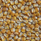 Trieuse polychrome de couleur des graines de RVB pour des graines et des noix