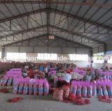 Il migliore aglio di origine dello Shandong di qualità