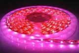 3528/5050 60LEDs/M LED cor-de-rosa a luz da faixa