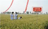 Efeito do fertilizante orgânico de ácido Humic no solo para resolver a poluição do ambiente