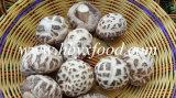 Alimento saporito secco del fungo di Shiitake del fiore bianco