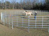 Un cancello dalle 16 del comitato iarde inc del cavallo, l'iarda rotonda, reti fisse del bestiame, rinchiude il diametro di 12m