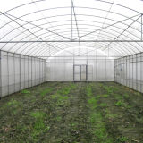 야채를 위한 저가 단 하나 경간 필름 녹색 집