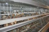 De Apparatuur van de Kippenren van de Kip van Automaticbaby voor de Landbouw van het Gevogelte (een Frame van het Type)
